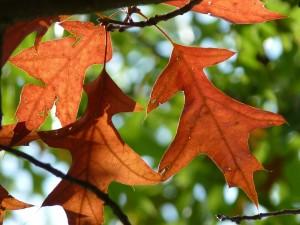 autumn-471938_1280