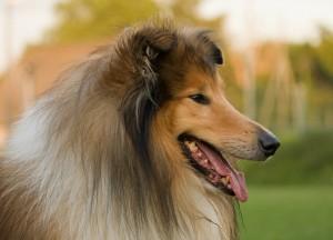 dog-220444_1280