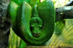 green-boa-244768_1280