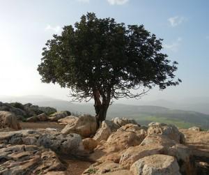 tree-189158_1280