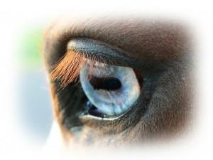 horse-422111_1280