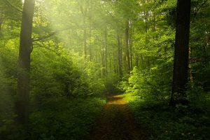 light-pathway_1345753_960_720